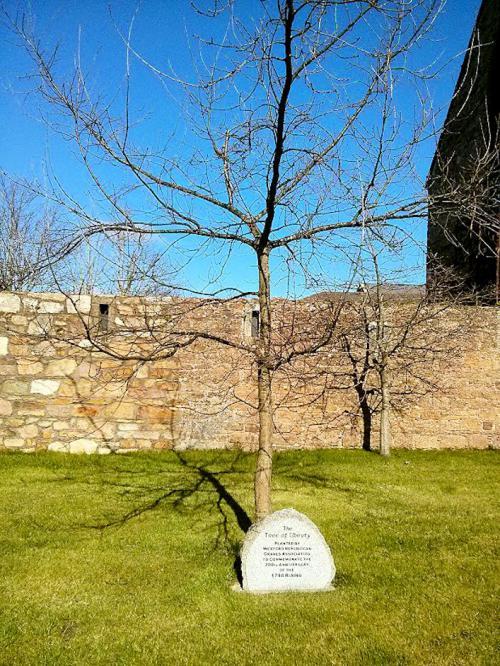 Tree of Liberty